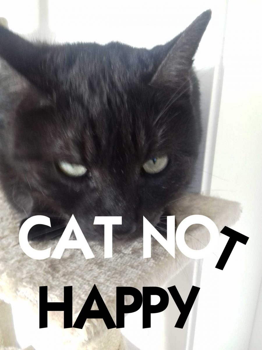 Cat-not-happy