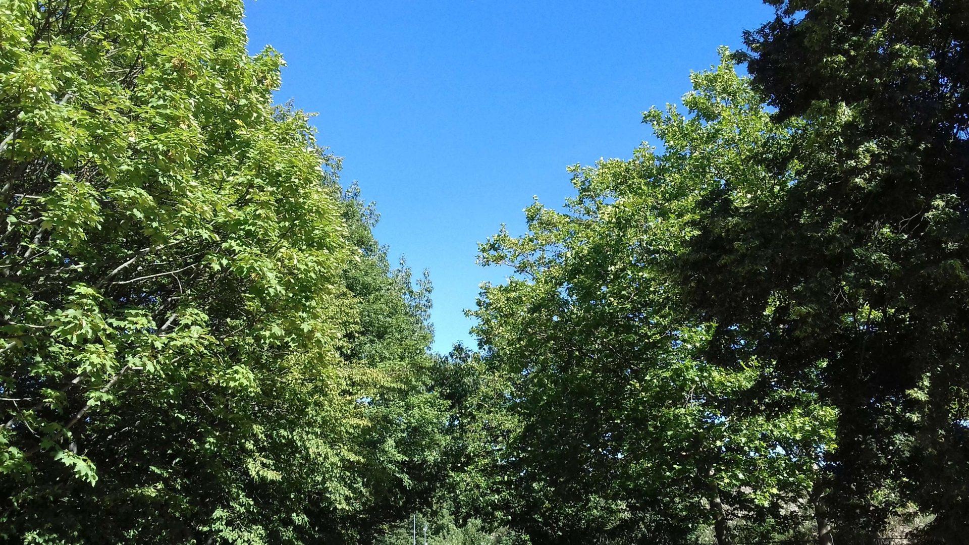 Bäume und blauer Himmel