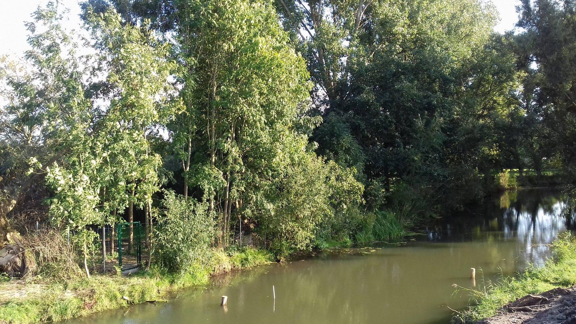 Schunter intakt. Grüne Bäume säumen den Flußlauf.